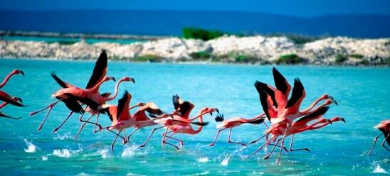 viaje-bonaire-flamencos